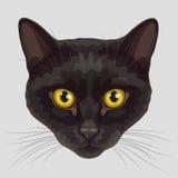 Museruola tirata del gatto nero Immagini Stock Libere da Diritti