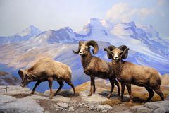 Museu americano de New York City da História natural Fotografia de Stock