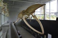 Museu da biodiversidade de Beaty Imagem de Stock