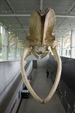 Museu da biodiversidade de Beaty Fotos de Stock Royalty Free
