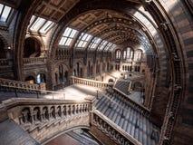 Museu da História natural fotografia de stock