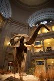 Museu da história natural de Smithsonian, C.C. Fotografia de Stock Royalty Free