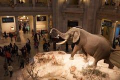 Museu da história natural de Smithsonian, C.C. Imagens de Stock Royalty Free