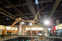 Museu de Melbourne Foto de Stock
