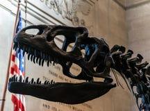 Museu de New York City de dinossauros das ciências naturais Fotografia de Stock