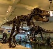 Museu de New York City de dinossauros das ciências naturais Imagem de Stock Royalty Free