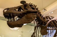 Museu de New York City de dinossauros das ciências naturais Imagens de Stock