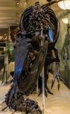 Museu de New York City de dinossauros das ciências naturais Foto de Stock Royalty Free