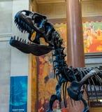Museu de New York City de dinossauros das ciências naturais Fotografia de Stock Royalty Free