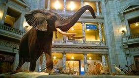 Museu de Smithsonian da História natural Imagens de Stock
