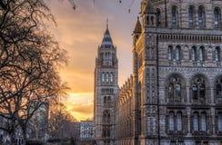 Museu Londres da História natural Fotos de Stock