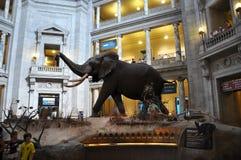Museu Nacional da História natural imagem de stock royalty free
