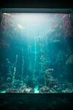 Museu Nacional de Marine Biology e do aquário fotografia de stock royalty free