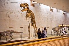 Museum av paleontologi i Moskva 8155 Royaltyfri Foto