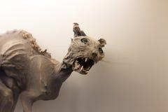 Museum exhibit of prehistoric cat. Fossil of prehistoric cat mummy as museum exhibit Royalty Free Stock Images