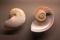 Museum Exhibition on Nautilus Shells Stock Photo
