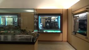 Museum Exhibits, Artwork, Culture. Stock video of musem exhibits stock video