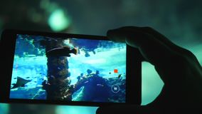 Museum of live fish, smartphone in hands shoots video of marine animals in large aquarium stock video footage