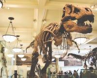 Dinosaur skeleton at the museum royalty free stock photo