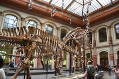 The Museum of natural history - berlin Royalty Free Stock Images
