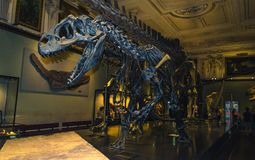 Museum of Natural History - dinosaur skeleton royalty free stock images