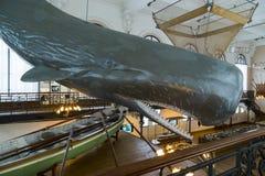 In the Museum of Oceanography in Monaco Stock Image
