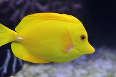 Aquarium of the Smoky Mountains stock photography
