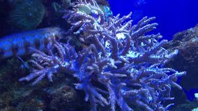 Museum of the World Ocean Kaliningrad. Museum of the World Ocean in Kaliningrad, Russia with a beautiful display of underwater plants and fish stock footage