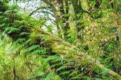 Musgo, árbol del helecho en Ang Ka Luang Nature Trail Fotos de archivo libres de regalías