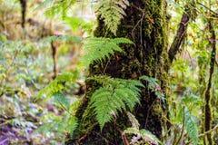 Musgo, árbol del helecho en Ang Ka Luang Nature Trail Foto de archivo