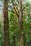 Musgo, árbol del helecho en Ang Ka Luang Nature Trail Imagen de archivo libre de regalías