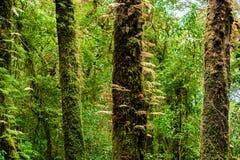 Musgo, árbol del helecho en Ang Ka Luang Nature Trail Imágenes de archivo libres de regalías