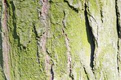 Musgo Árvore Casca de madeira E nave r Textura de madeira Texturas naturais Fundo Backgrou de madeira foto de stock royalty free