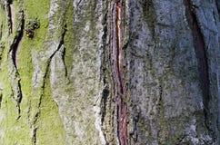 Musgo Árvore Casca de madeira E nave r Textura de madeira Texturas naturais Fundo Backgrou de madeira fotografia de stock royalty free