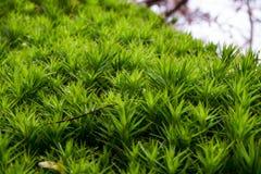Musgo afiado e verde fotografia de stock royalty free