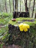 Musgo amarelo Fotos de Stock