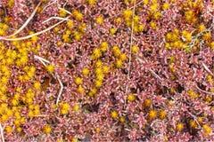 musgo coloreado brillante macro Fotografía de archivo libre de regalías