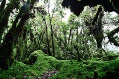Musgo de esfagno en Ang Ka Nature Trail Doi Inthanon, Chiangmai, Th Fotos de archivo libres de regalías