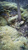 Musgo de los acantilados de la montaña del túnel de Banff Foto de archivo libre de regalías