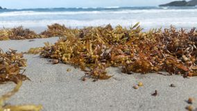 Musgo de mar cerca de la orilla de mar Foto de archivo