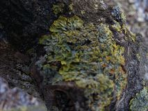 Musgo de un árbol anaranjado fotos de archivo