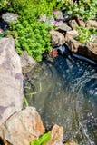 Musgo decorativo que cresce na costa da lagoa Imagens de Stock Royalty Free