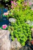 Musgo decorativo que cresce na costa da lagoa Imagem de Stock