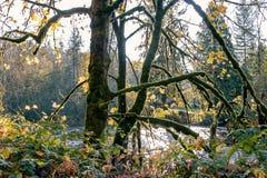 Musgo del árbol que brilla intensamente en caída foto de archivo libre de regalías