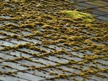 Musgo del color del pantano en una azotea Imagen de archivo
