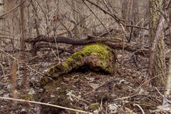 Musgo del molino del grano para moler de la cala del pino Imagen de archivo