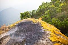 Musgo del oro en Pha Hin Goob Foto de archivo libre de regalías
