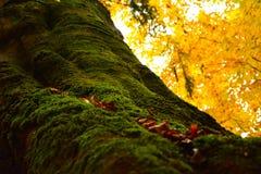 Musgo del otoño fotografía de archivo libre de regalías