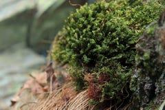 Musgo del otoño e hierba secada imagen de archivo