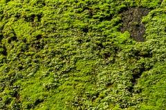 Musgo del verde de la visión superior en la roca Imagenes de archivo
